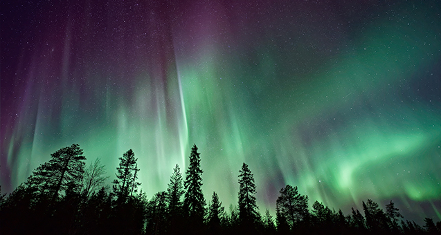 The Aurora Borealis lights up the night sky against a foreground of spruce tree silohuettes